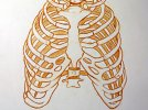 gv-ribcage_mass